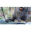 """""""åä'¨¨ ¨^+9o38"""" – ett meddelande från lemuren Kitty"""