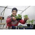 Pressinbjudan: Nelson Garden lanserar nytt frösortiment för sådd året runt i samarbete med Sara Bäckmo