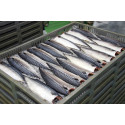 Økt volum og redusert verdi for eksporten av pelagisk fisk i 2017