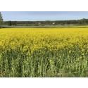Stoppa förslaget om koldioxidskatt på förnybara biooljor