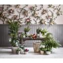 Romantisk lantidyll med retroväxter