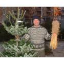 Gratis utleie av juletrær