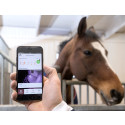 Bevaka hästen i boxen under Elmia Scandinavian Horse Show