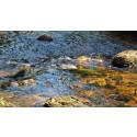 Svevia bygger fri väg för bäckens djur och organismer