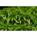 Was ist eigentlich Moorpflanzenextrakt?