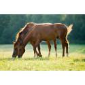 70 % av Sveriges politiker tycker att hästnäringen är viktig