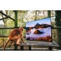 4K-tv skal hjælpe aber i fangenskab tilbage til naturen