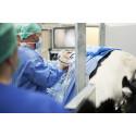 Ytterligare en specialist i stordjurskirurgi på Universitetsdjursjukhusets hästklinik