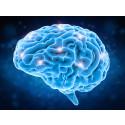 Parkinsons sjukdom kan spridas i hjärnan genom nyupptäckt mekanism