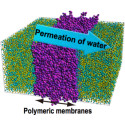 Permeation Mechanism of Water through Polymeric Membrane; Clarified for the First Time in the World Expectations for Development of Membranes with Functions, Such As Seawater Desalination - Kindai University
