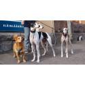 Suomen ensimmäinen rescue-eläimiin erikoistunut eläinlääkäriasema Helsinkiin