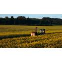 Öka skörden med Pollineringspoolen –  en tjänst från Biodlingsföretagarna