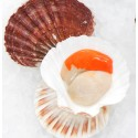Culinary coup continued for Scottish seafood until 2016
