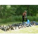 Eva Björkman, The Stone Field, installation och performance.