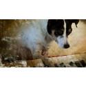 Bjud med din hund på bio på Göteborgs dans- och teaterfestival!