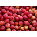 Palla fruktsvinn! Säsongsstart för fruktbyte på återvinningscentralen