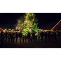 Jul i Skånes Djurpark med snö- och tomtegaranti
