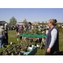 Haveselskabet holder plantemarkeder over hele landet