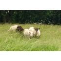 Ulliga gräsklippare till Husie