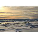 Ansök om stöd till polarforskning