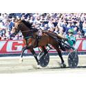 Franska stjärnhästen Un Mec D'Heripre klar för Åby Stora Pris
