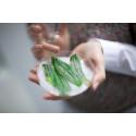 Elinympäristöjen pirstoutuminen altistaa luonnonkasvit taudeille