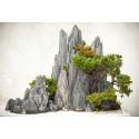 BONSAI / IKEBANA - Levande konst från Japan