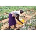 Stor FN-bevilling skal sikre befolkning mod klimaforandringer