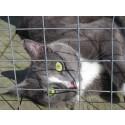 Ny undersökning: Svår situation för landets överfulla katthem