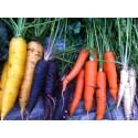 Svekologiskt i nya Livsmedelstrategin