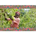 8 av 10 vet inte att kaffet håller på att ta slut - Zoégas hjälper kvinnliga odlare till ledande positioner för kaffets framtid