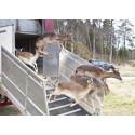 Pressinbjudan: Välkommen till invigningen av hjorthägnet i Brunnby Vik