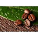 JUST NU: Fairtrade-kaffet uppmärksammas på Drottningtorget i Göteborg