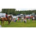 Elisa Thorell får sin häst att dansa line dance tillsammans med ett antal barn ur publiken.