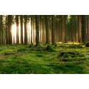 Riksdagspolitiker – fortsätt satsa på hållbar energi från skogen