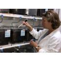 Hormonstörande bekämpningsmedel försämrar fortplantningen hos grodor