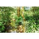 Rainforest Alliance: därför är buffertzoner viktiga för vattendrag