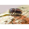 Pressinbjudan: Världsunikt center för insektsforskning invigs!