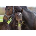 Uusia hyvinvointipalveluja hevosille Evidensia Seinäjoella