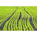 Ny SVU-rapport: Fosforåtervinning i Europa