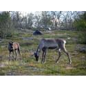 Kan Rudolf och hans vänner bromsa den globala uppvärmningen?