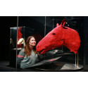 Vielä ehdit näkemään upean eläinten anatomianäyttelyn – nyt jo yli 200 000 kävijää