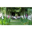Vårlöksnyheter - i sommar spirar välbekanta blommor!