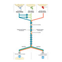 Complement System - assay solutions providing a complete picture of complement function.