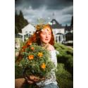 Norrvikens trädgårdar hälsar välkommen