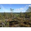 Tre nya naturreservat i länet