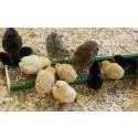 Kycklingar i barnens bondgård