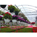 Why the 2017-2022 Is the Perfect Time to Start a Business in Floriculture sector/industry for United States market?