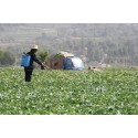 Asia-Pacific Bio Pesticides Market Analysis and Forecasts New Research Report on 2022