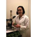 Nya fynd om växters skyddsmekanismer mot varierande ljus